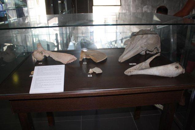 Vitrina del Centro de Interpretación de Cetáceos de Tarifa CICAM.